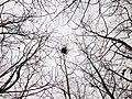 鳥巢 - panoramio (1).jpg