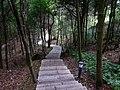 鼓岭3号游步道 - No.3 Walkway of Guling Mountain - 2015.06 - panoramio.jpg