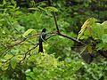 ... bird (3709767687).jpg