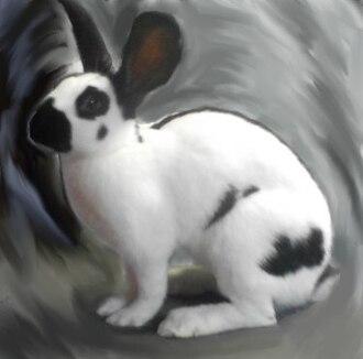 American Rabbit Breeders Association - Checkered Giant rabbit