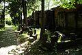 104viki Cmentarz żydowski na Ślężnej. Foto Barbara Maliszewska.jpg