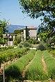110517-jardin-027.jpg