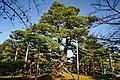 131109 Kenrokuen Kanazawa Ishikawa pref Japan03s3.jpg