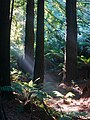 160430-027 Californian Redwood Forest.jpg