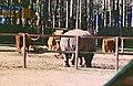 2002-04-28 5345 Gänserndorf Breitmaul-Nashorn.jpg