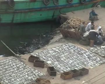 2004-03-vev-egypte-poisson