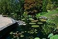 2008-07-24 Lily pond at Duke Gardens 2.jpg