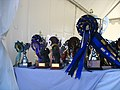 2010 pony show prize table.JPG
