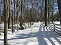 2016-01-31 14 05 34 A tributary of Hosepen Run and a snow-covered trail in a snowy woodland eight days after the Blizzard of 2016 in the Franklin Farm section of Oak Hill, Fairfax County, Virginia.jpg