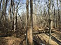 2016-02-08 13 36 28 View north along the Gerry Connolly Cross County Trail and down Difficult Run between Vale Road and Lawyers Road in Oakton, Fairfax County, Virginia.jpg