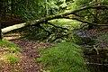 2016 Wald Jasmund 01.jpg