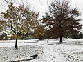2018-11-15 09 17 51 A snow and sleet covered Norway Maple and Pin Oak along a walking path and parking lot in Franklin Farm Park in the Franklin Farm section of Oak Hill, Fairfax County, Virginia.jpg