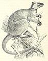 328 of 'Im australischen Busch und an den Küsten des Korallenmeeres. Reiseerlebnisse und Beobachtungen eines Naturforschers in Australien, Neu Guinea und den Molukken ... Mit 85 Abbildungen, etc' (11301366984).jpg