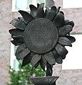 AEG-Beamtentor Detail Gitter Sonnenblume.jpg