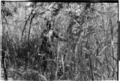 ASC Leiden - Coutinho Collection - 14 09 - Campada college on the northern frontline, Guinea-Bissau - Digging trenches - 1973.tif