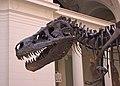 A T.Rex Named Sue (464703771).jpg