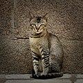 A cat spotted near OU arts college (2).jpg