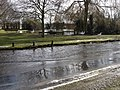 A flooded road, and pond with geese - geograph.org.uk - 1157613.jpg