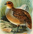 A hand-book to the game-birds (1895) (14753209624).jpg