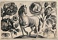 A horse surrounded by three roses, a marigold, a daffodil an Wellcome V0044037.jpg