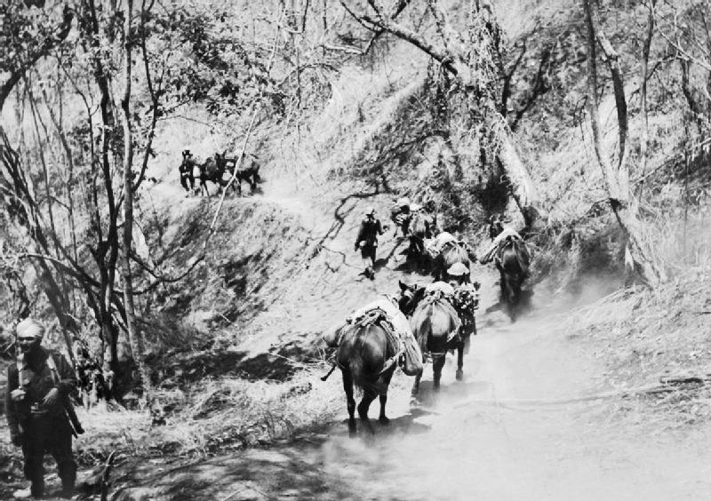 A mule column of the 2nd Punjabi Regiment carries supplies to the front line, Burma, 1944. IND3423