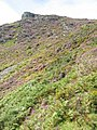 A rock outcrop on the upper edge of Bryniau Glo - geograph.org.uk - 742322.jpg