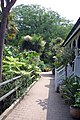 Abbotsbury Tropical Gardens - geograph.org.uk - 1257230.jpg