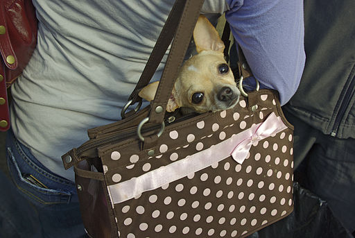 Abita Stage Purse Chihuahua