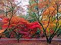 Acer Glade, Westonbirt Arboretum - geograph.org.uk - 69734.jpg