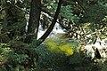 Adams Brook (near East Dover, Green Mountains, Vermont, USA) 1 (49438823971).jpg