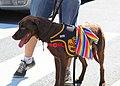Adopt Me 02 - DC Gay Pride Parade 2012 (7171190173).jpg