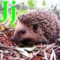 Alfabet zwierząt - literka J.png