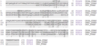 Crystallin - An alignment of the human crystallin proteins alpha, beta, and gamma from Uniprot.