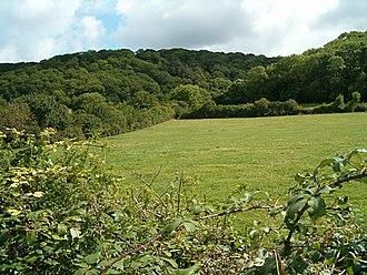 Aller and Beer Woods - Image: Allerwood