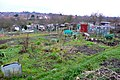 Allotments near Totteridge - geograph.org.uk - 1090940.jpg