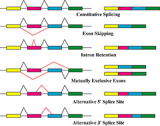 Protein isoform - Image: Alternative splicing