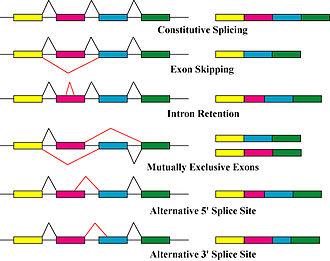 Protein isoform - Image: Alternative splicing