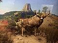American Museum of Natural History - New York - USA - panoramio (3).jpg
