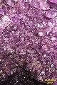 Amethyst (Alpenrose, Lermoos) (15740960886).jpg