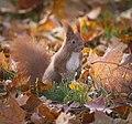 Amongst the leaves (32302384046).jpg