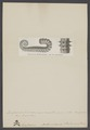 Ancyloceras - Print - Iconographia Zoologica - Special Collections University of Amsterdam - UBAINV0274 005 10 0026.tif