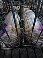 Animal Cruelty Iowa Select Farms IS 2011-05-30 06 (5840787225).jpg