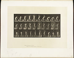 Animal locomotion. Plate 378 (Boston Public Library).jpg