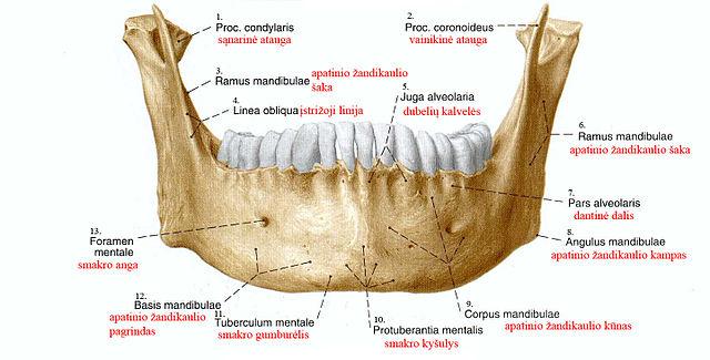 Duele la parte inferior del vientre en la parte derecha y da en los riñones
