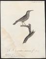 Arachnothera zeylonica - 1802 - Print - Iconographia Zoologica - Special Collections University of Amsterdam - UBA01 IZ19000193.tif