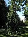 Arboretum, Kórnik 2010 (6).jpg