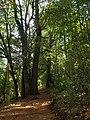 Arboretum Isla Teja 20190921.jpg