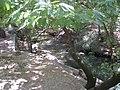 Archaggelos, Greece - panoramio (30).jpg