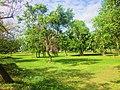 Area verde sobre el bule, Chetumal. - panoramio.jpg
