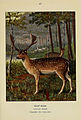 Atlas de poche des mammifères de France, de la Suisse romane et de la Belgique (Pl. 43) (6311650387).jpg